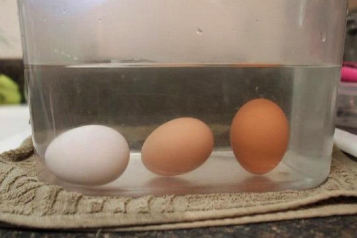 Полезные советы: как определить качество яиц