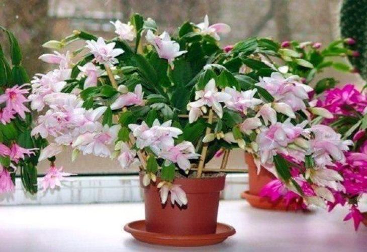 комнатные растения: подкормка