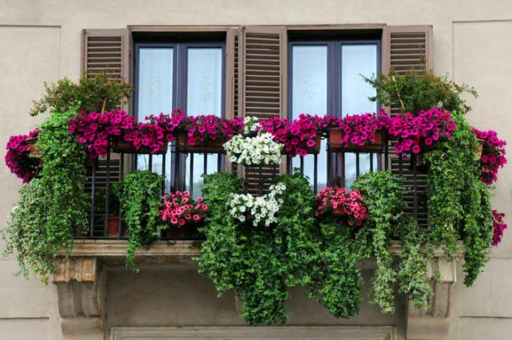балкон: ампельные цветы