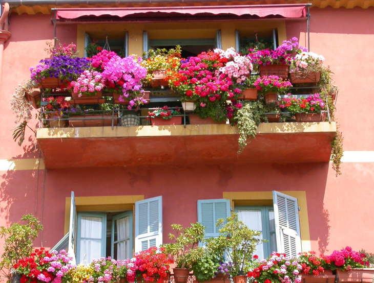 балкон: ампельное чудо