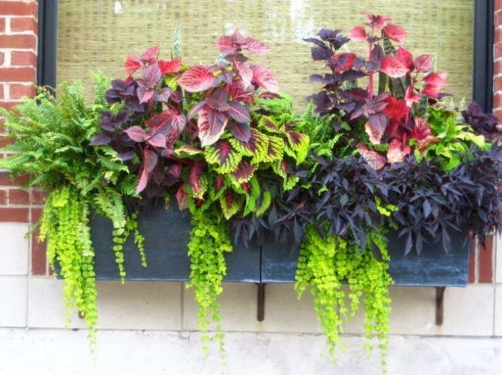 балконный ящик с цветами